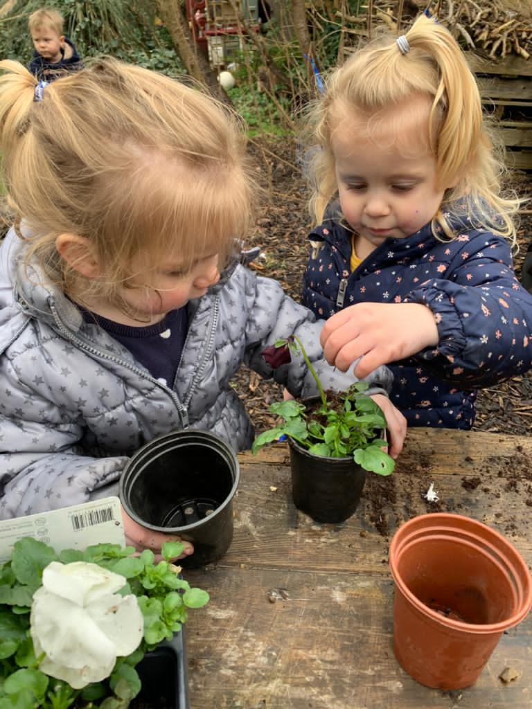 Planting flowers- tods